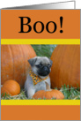 Halloween Pug Puppy