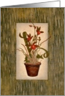 Floral - Potted Tiger Orchid