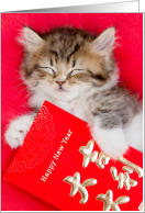 Cuteness Overload Kitten with Chinese New Year Red Envelopes card