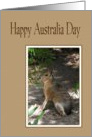 Australia Day - Wallaby card