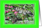 Birthday - Butterflies card