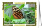 Birthday - Butterfly card