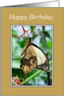 Birthday - Swallowtail Butterfly card