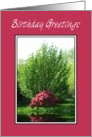 Birthday - Tree Reflection card
