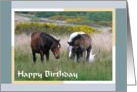 Birthday - Wild Ponies card