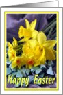 Easter - Daffodils & Narcissi card