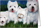 Westie West Highland Terrier Dog -Squeeze card