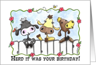 Happy Birthday-Three Cows Mooing card