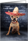 Happy Cinco de Mayo Cards