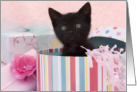 Black Kitten Birthday Cards
