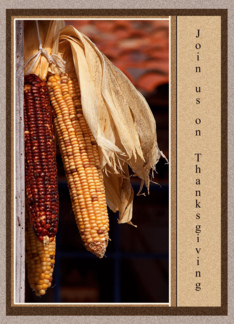 Indian Corn Thanksgiving Invitations Cards Greeting Card