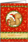 Squirrel Red and Gold Christmas Cards