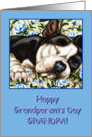 Grandpa Happy Grandparents Day, Sleeping Boston Terrier card