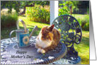 Happy Mother's Day, Calico cat sitting on porch,garden view card