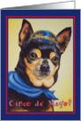 Happy Cinco de Mayo Fiesta Time - Chihuahua Dog card