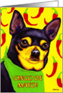 Cinco de Mayo - Chihuahua Dog Chili Peppers card