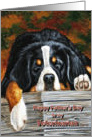 Veterinarian Father's Day, Sleeping Bernese Mountain Dog card