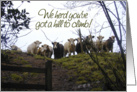 Get well soon. Sick or injured. Cows photograph card