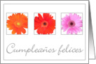 Gerbera Happy Birthday card