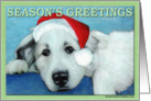 Great Pyrenees Holiday Christmas Card