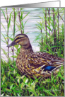 Mallard Duck Wild Bird Painting Earth Day card