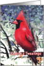 Season's Tweetings Cardinal Bird Painting Christmas Card