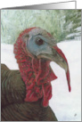 Wild Turkey Bird Winter Painting card