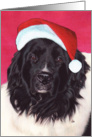 Landseer Newfoundland Dog Art Christmas Santa Hat card