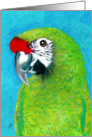 Military Macaw Painting card