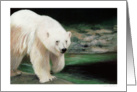 Polar Bear Painting card