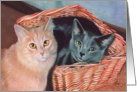 Vaccinations Due - Cats in Basket Painting card