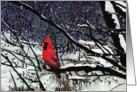 Winter Cardinal Painting Christmas Card