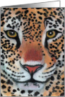 Leopard Jaguar Wildife Cat. Blank all occasion card
