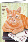 Orange Tabby Cat - Meows from me - Notecard card