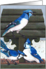 Blue Jays Bird Bird feeder Winter Painting card