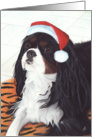 King Charles Spaniel Dog Happy Holidays Christmas card