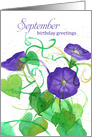 September Birthday Purple and Fuchsia Aster Birth Month Flowers card