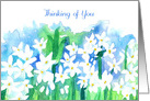 Thinking of You Narcissus Paperwhites Flower Art Drawing card