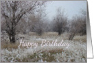Winter Trees White Frost Birthday Card Nature Landscape card