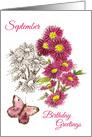 Happy September Birthday Greetings Pink Aster Flower Watercolor card