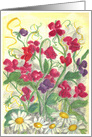 Sweet Pea Daisy Flower Garden Watercolor Painting Fine Art Blank Card