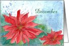 December Poinsettia Birthday Flower card