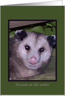Possum in the Arbor card