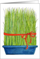 Wheat Grass - Persian New Year card