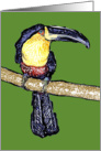 Tropical Toucan card