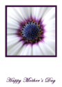 White Flower Mother's Day Greeting Cards