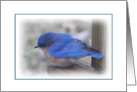 Happiness bluebird card