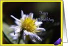 Happy Birthday petals card