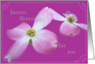 Dogwood Easter Blessings card