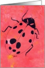 Ladybug, favorite insect card